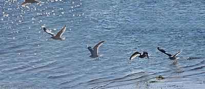 birds_5044-5048-1-1