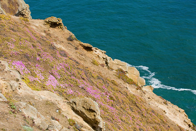 Rock flowers at Point Reyes