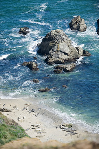Seals at Chimney Rock