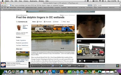 An article about the Bolsa Chica Dolphin containing two of my photos (in this gallery) from the San Diego Union Tribune's website.