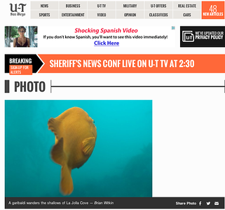 San Diego Union Tribune Underwater Photo: Sunday August 11th, 2013.