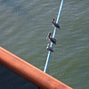 Pelicans on the Mooring Lines