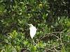 Such a bright white bird