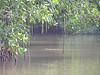 Mangroves making more mangroves
