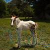 Foal_0339