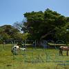 Cieba Tree_0434