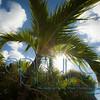 Palms and sun_0132