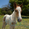 Foal_0375