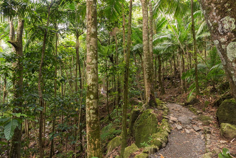 La Mina Trail,  El Yungue National Rain Forest