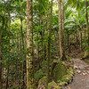 La Mina Trail,  El Yungue National Rain Forest
