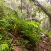 El Yungue Rain Forest stream
