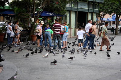 Puerto Rican kids chasing the pigeons.