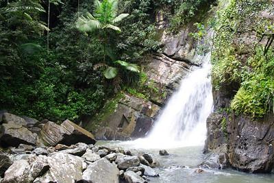 El Yunque National Rain Forest in Puerto Rico