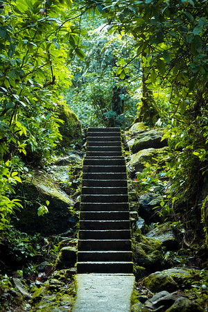 El Yunque National Forest, Puerto Rico, USA