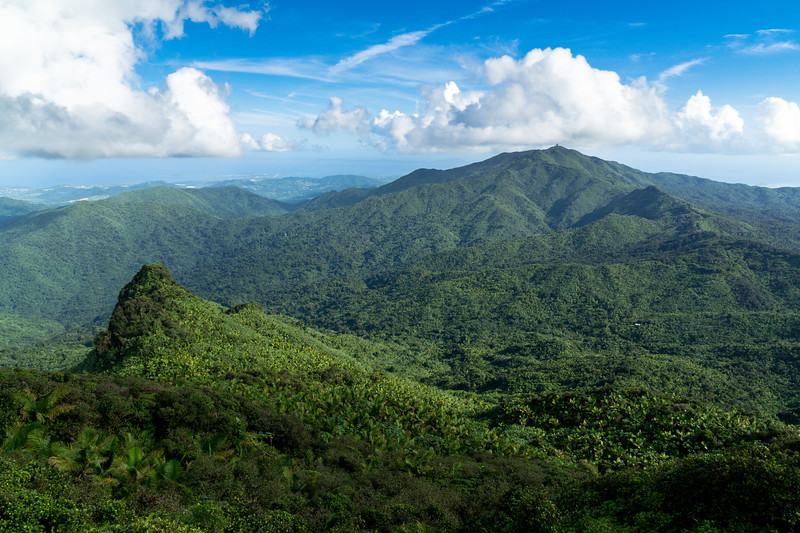Summit, El Yunque National Forest, Puerto Rico, USA