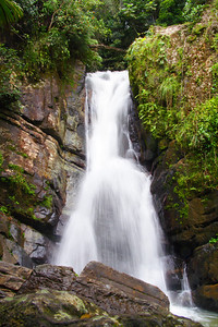 El Yunque National Rain Forest in Puerto Rico
