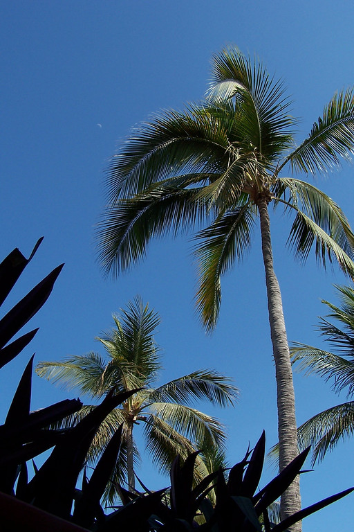 Palm trees and a very small moon at Villas Vallarta.