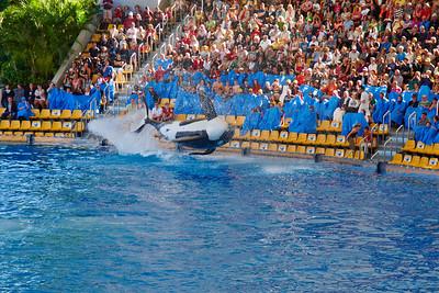 Orca show
