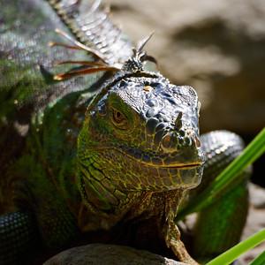 Liz the Lizard