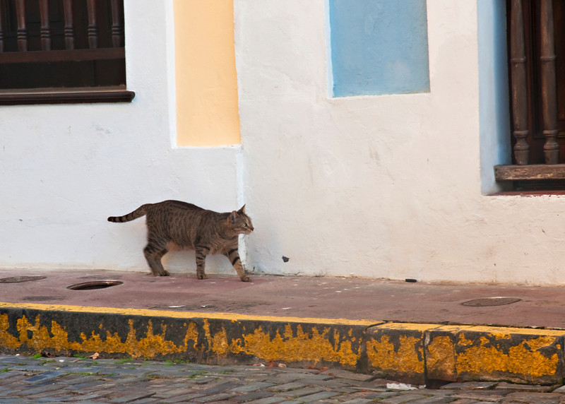El gato....many cats in Old San Juan.