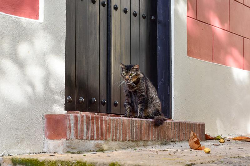 Cat of Old San Juan, Puerto Rico