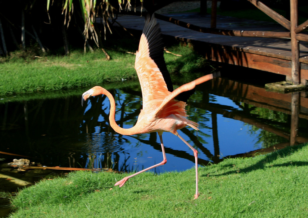 Birds of Punta Cana DR_31