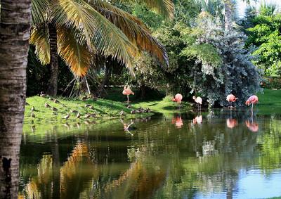 Birds of Punta Cana DR_23