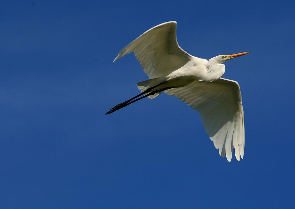 Birds of Punta Cana DR_79