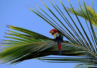 Birds of Punta Cana DR_8