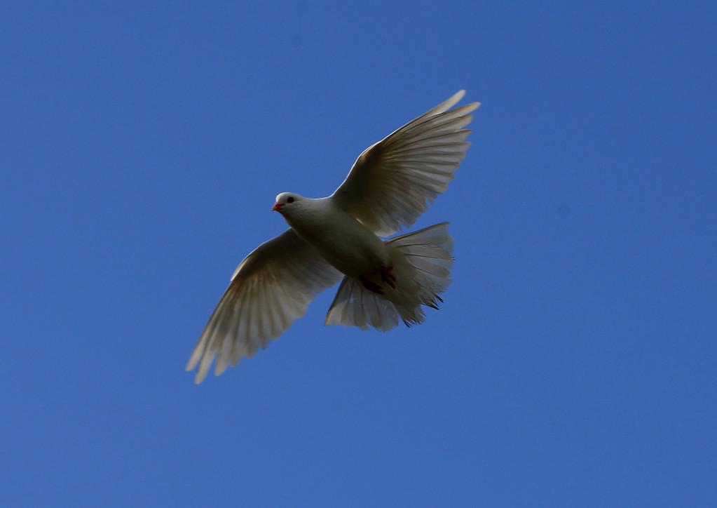 Birds of Punta Cana DR_19