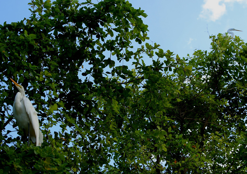 Birds of Punta Cana DR_66