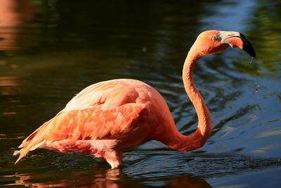 Birds of Punta Cana DR_30