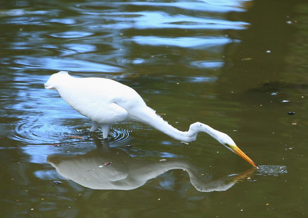 Birds of Punta Cana DR_47