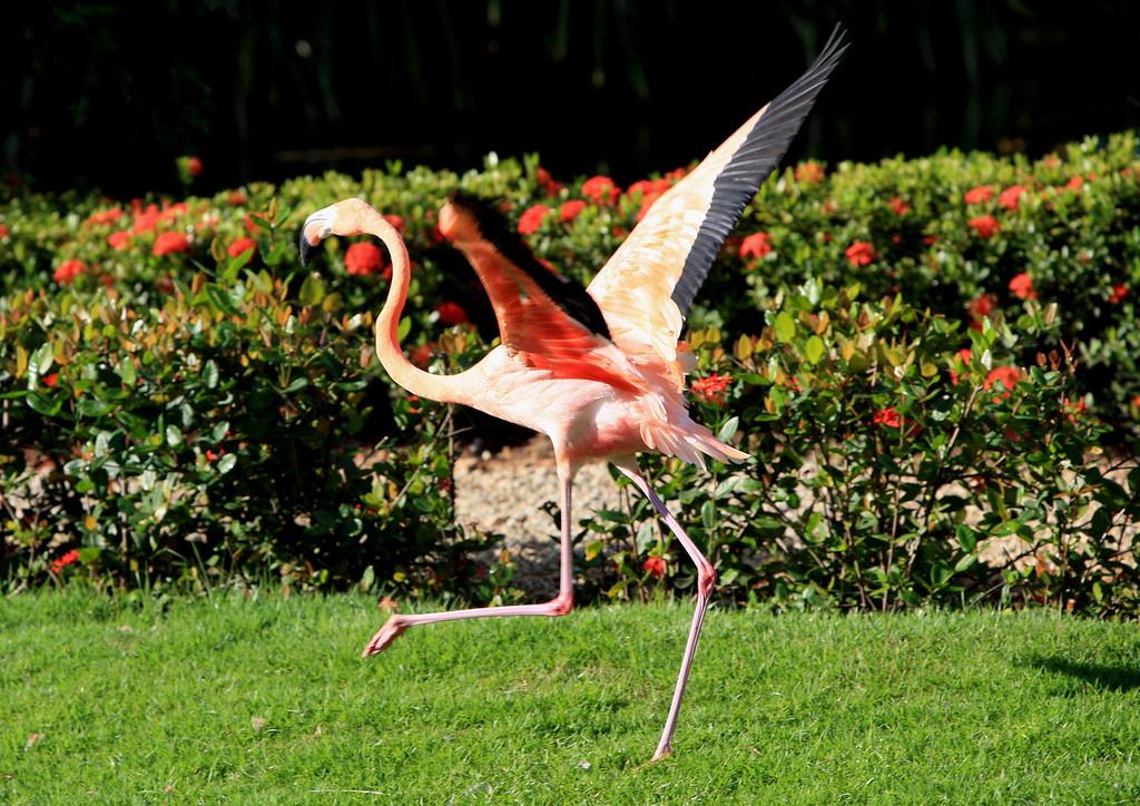 Birds of Punta Cana DR_33