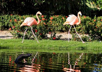 Birds of Punta Cana DR_25