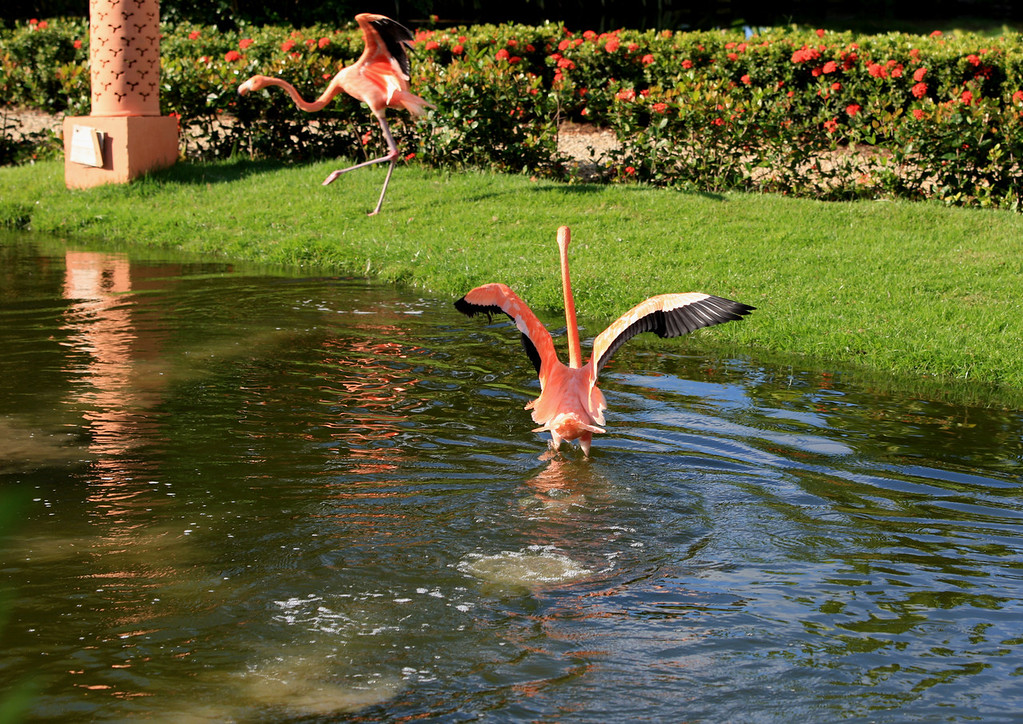 Birds of Punta Cana DR_32