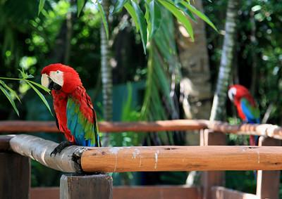Birds of Punta Cana DR_1