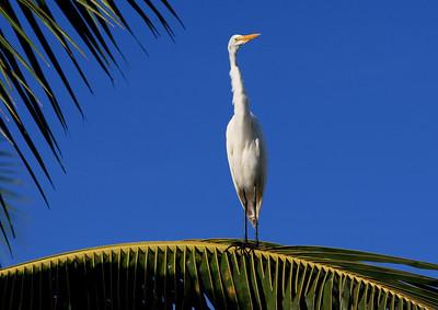 Birds of Punta Cana DR_37
