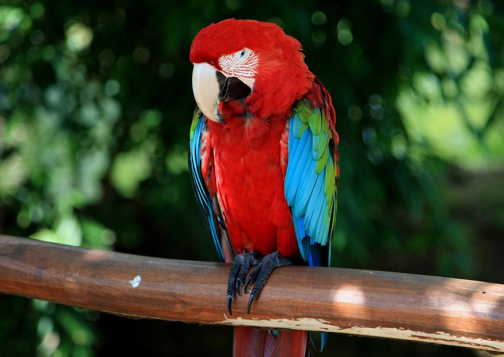 Birds of Punta Cana DR_3