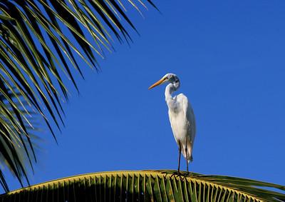 Birds of Punta Cana DR_38
