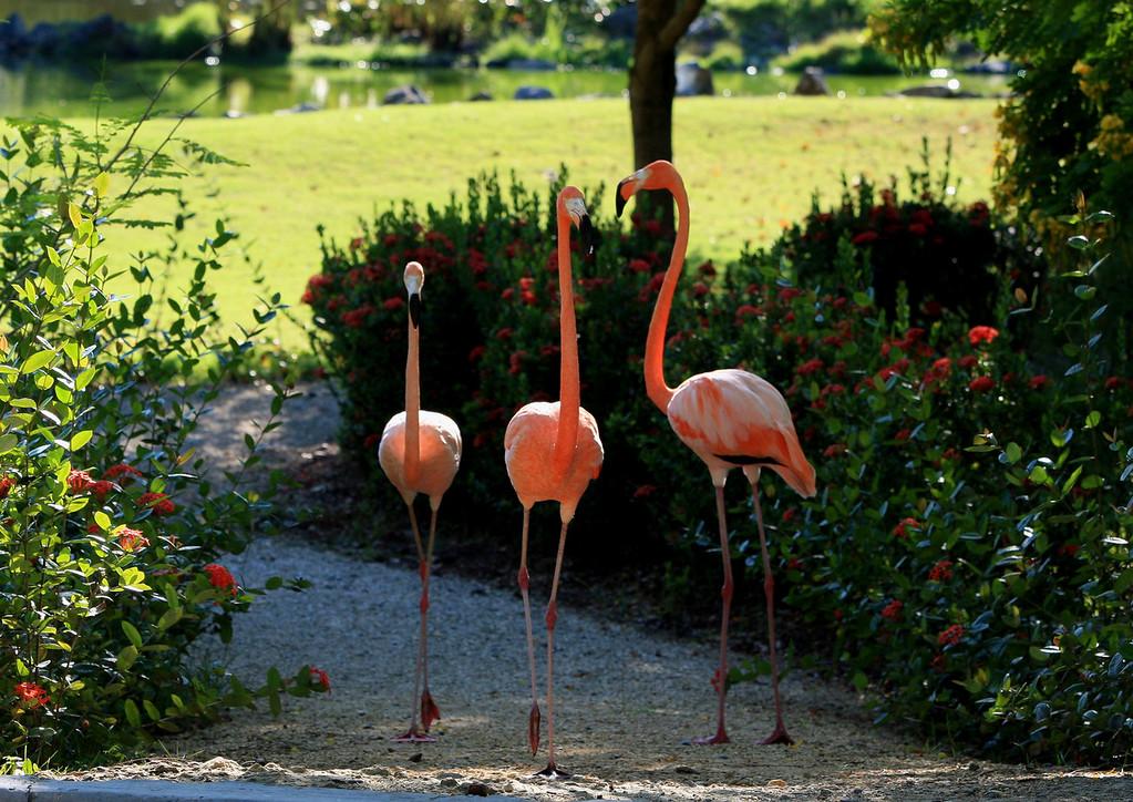 Birds of Punta Cana DR_94