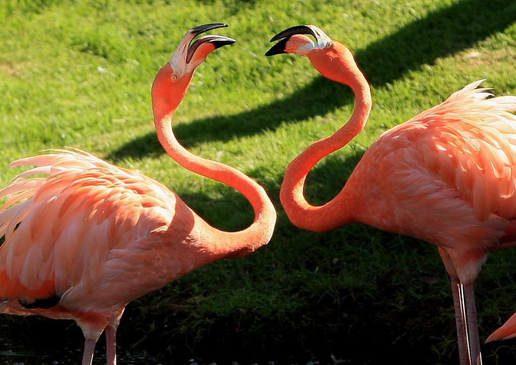 Birds of Punta Cana DR_85