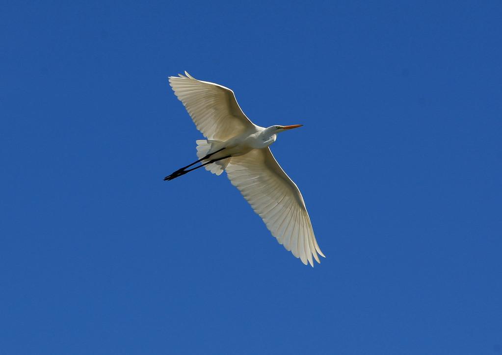 Birds of Punta Cana DR_80
