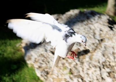 Birds of Punta Cana DR_12