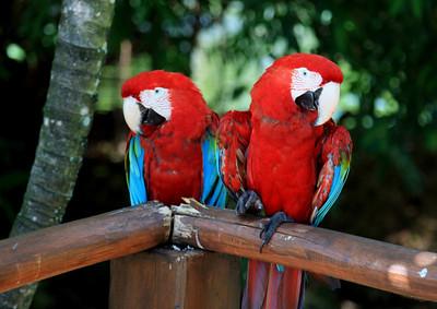 Birds of Punta Cana DR_6