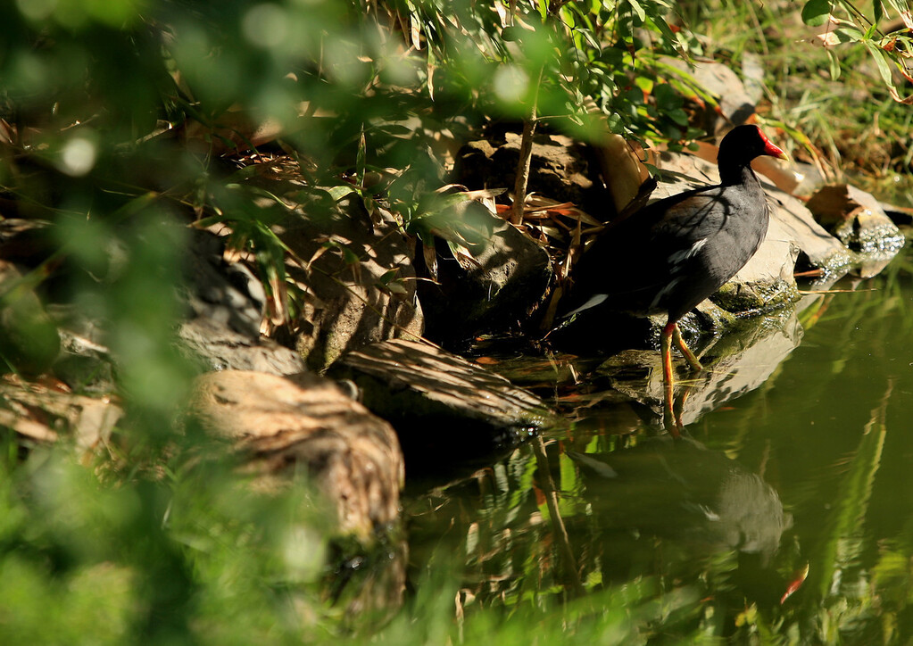 Birds of Punta Cana DR_88