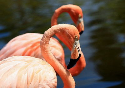 Birds of Punta Cana DR_45