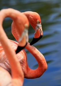 Birds of Punta Cana DR_46
