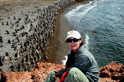 SOUTH AMERICA - The Penguins of Punta Tombo 2009