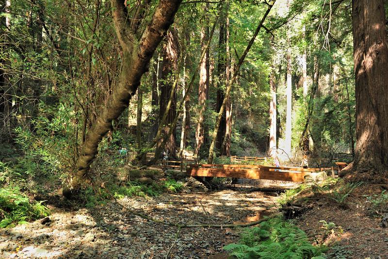 Muir Woods redwoods